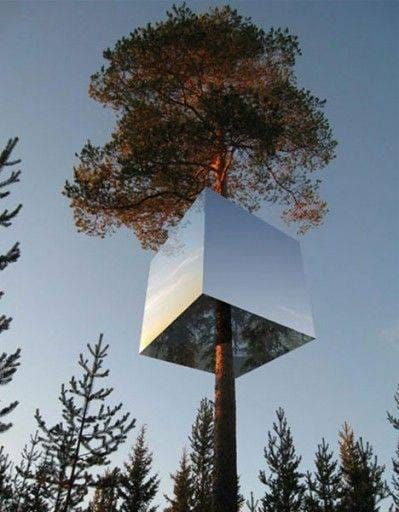 hotel-in-tree